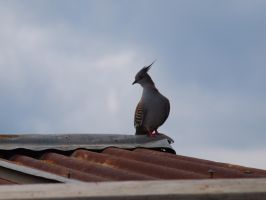Rooftop Topknot by Buggi8