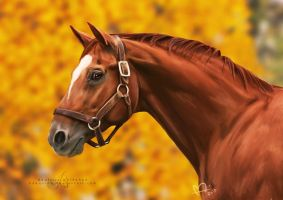 Man o' War by bdequine