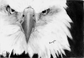 The eagle by KristiT