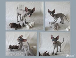 Sphynx Cat Doll Silver by LimitlessEndeavours