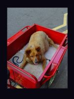 Dog in a cart... by MarcWasHere
