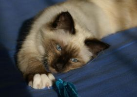 tired cat by Nathanael815
