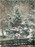 The Snow Is Back-2 by eMBeeL