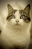 Psychotic cat by Rudy06