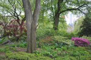 Central Park Stock 53 by FairieGoodMother