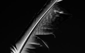 .feather by orbatid