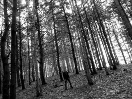 Among the Trees by tom-girl5973