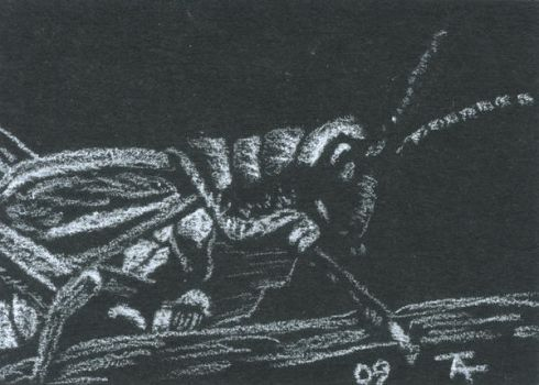 Grasshopper - ACEO - SOLD by Orchid-Black