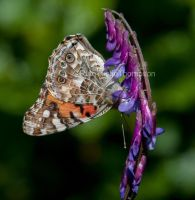 Underside of a lady by kayaksailor