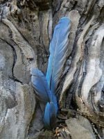 Blue Jay Feathers by Samela7
