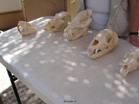 Animal Skulls in Az. by HieiNaraku
