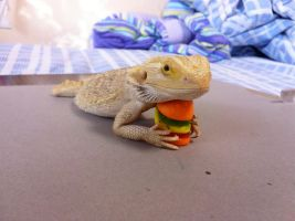 I has a Cheeseburger by Hexighost
