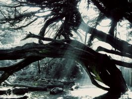 Old Growth Illuminated by ForgottenMoonchild