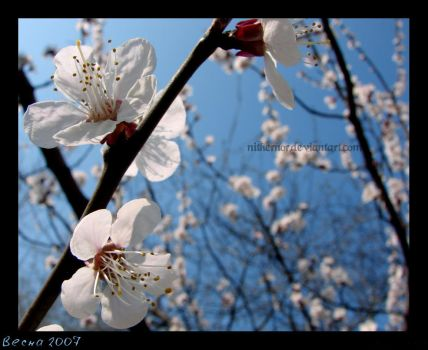 Spring mood by nithernor