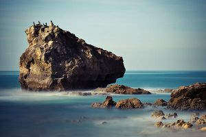 The rock in birds by ChristineAmat