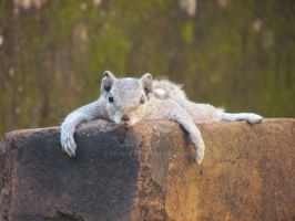 Lazy Squirrel by silinet
