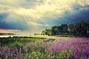 Lavender Landscapeby 2 by sunny2011bj