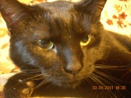 My cat Asia EXTREME CLOSE UP by Ninji99
