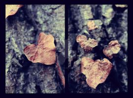 Ivy (Diptych) by MagpieMagic
