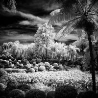 Infrared Trees by MichiLauke