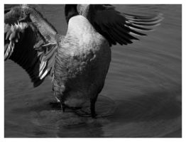 Goose Royal 2 by wagepeacebeach