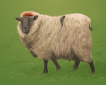 Speedpaint: Sheep by TheElvishDevil