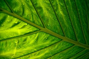 Behind the Leaf by 3hanphoto