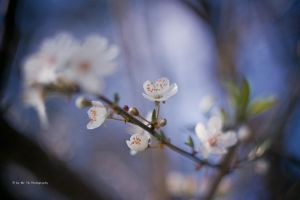 Beautiful Spring Day by Tb--Photography