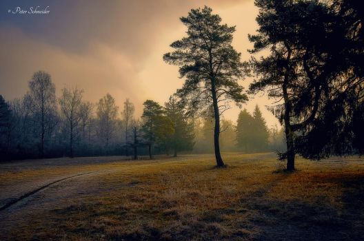Cold morninglight. by Phototubby