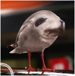 Sealgull by HumanDescent