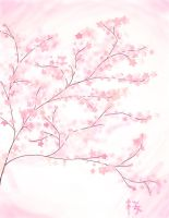 Cherry Blossoms by SoaringSong