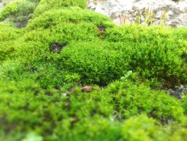 A tiny forest! by Gharrum
