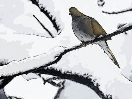 Mourning Dove by MichelLalonde