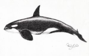 Killer Whale by Granados101