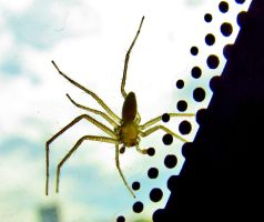 Dots and spider by DDEBB