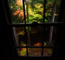 Window Tree by GeraldWinslow