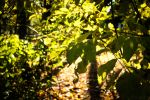 Small|Heaven|Of|Leaves by Dc-Creative