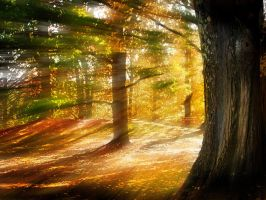 Filtering Sunlight in the Forest by jesus-at-art