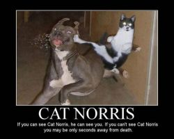 screw chuck norris here comes cat norris pow by liamda1