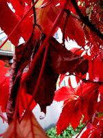 Behind the leafs by PipFish