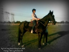 My Old Horse Stacey 17.2hh by JemJemm