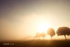 morning light by hermik