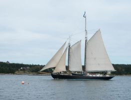 Maine Sail by archistock