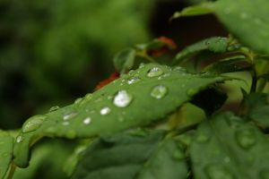 Green Leaf - Rain Drops by KleioAmon