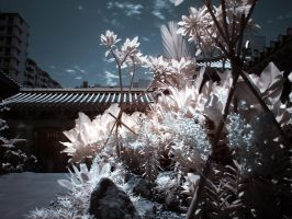 iNfraRed series - cHinatOwn 5 by shin-ex