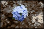 Flower by AlamatJacob
