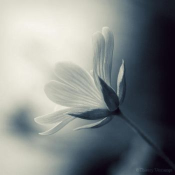 In my dreams... 3 by ThierryV