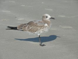 Seagull 1 by stormymay888