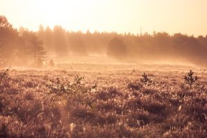Morning Forest 3 by BrainDimensions