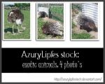 Exotic Animals pack II by AzurylipfesStock